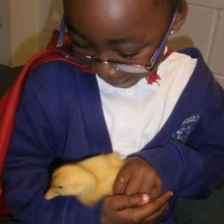 South Grove Nursery children interacting with baby Duckling